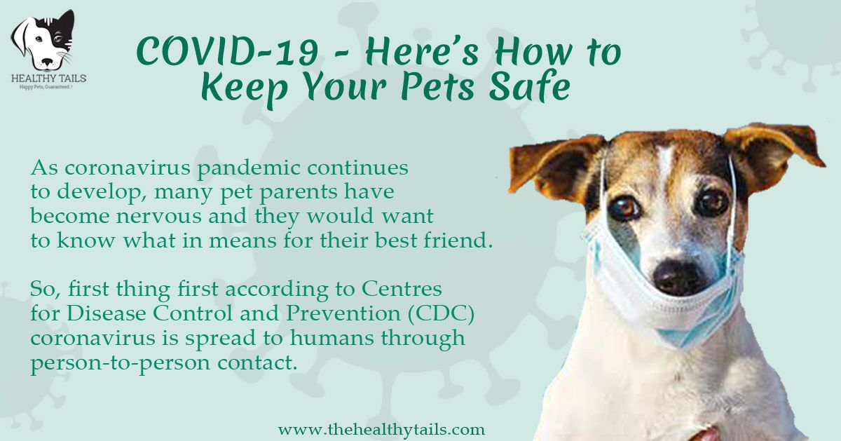 COVID-19 – Here's How To Keep Your Pets Safe